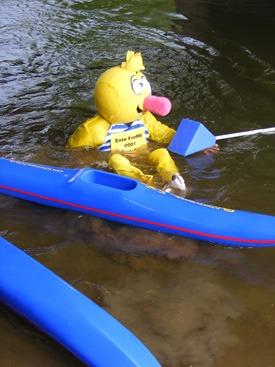 Ente Freddy läuft nicht mehr auf dem Wasser - Ein Glück, daß Freddy schwimmen kann.